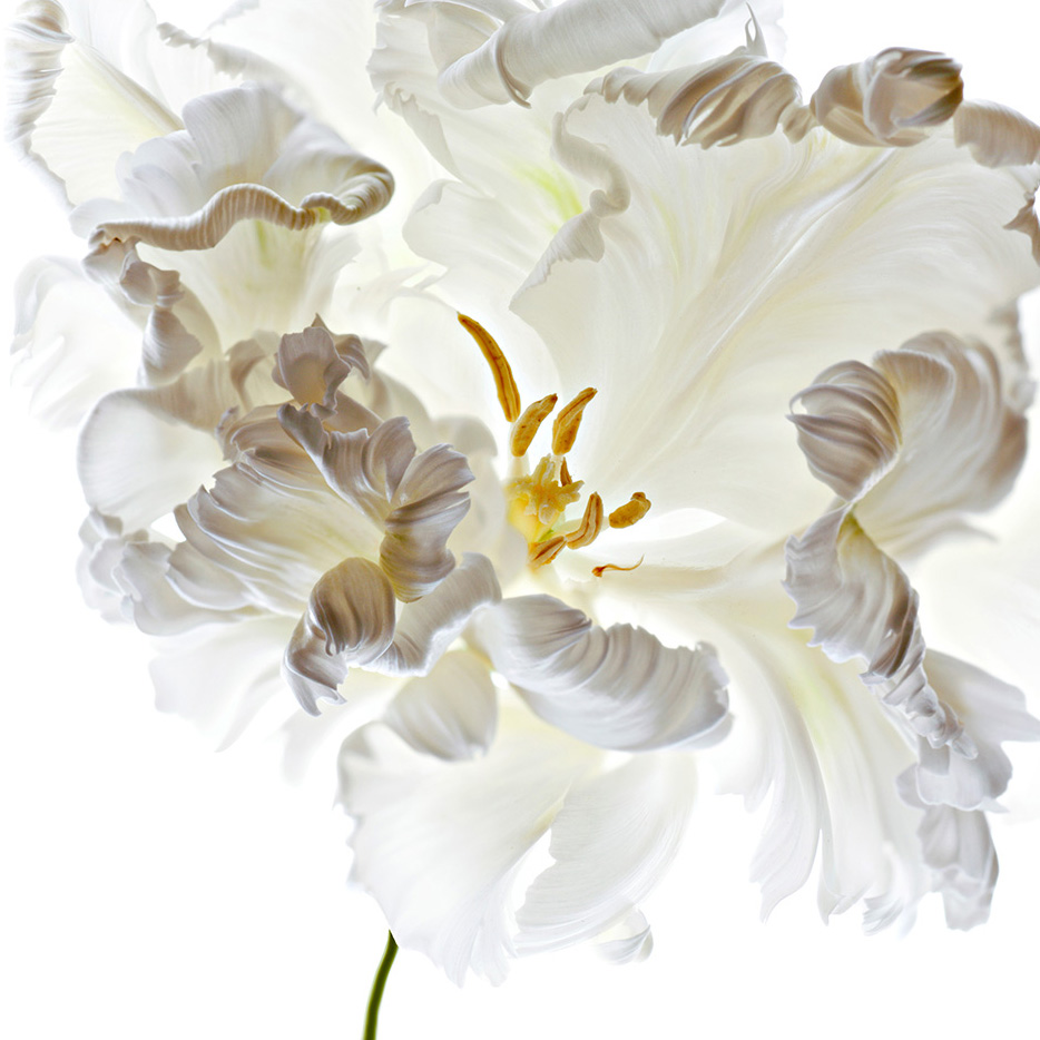 Creative Flower Photography With Polina Plotnikova
