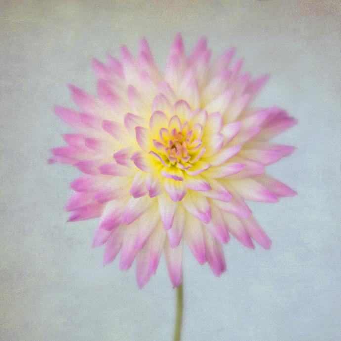 creative flower photography workshop in London