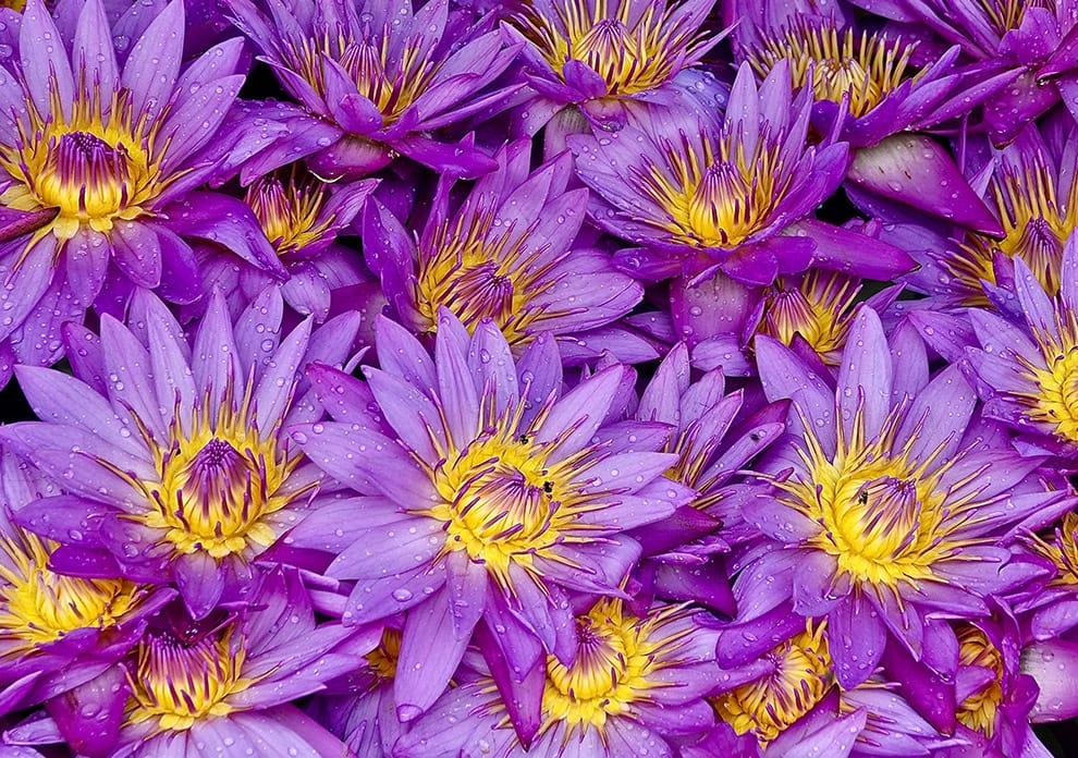 John Benn - flower photography