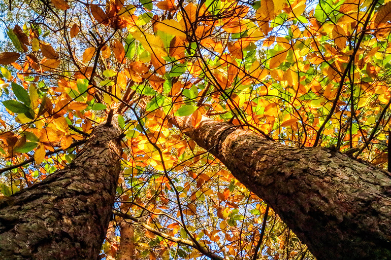 Oliver Tillard second place winner of the Colours of Autumn photography competition
