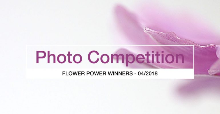 flower power competition winners