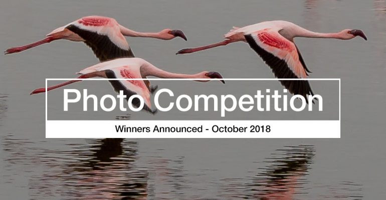 Rain and Water Reflections Photography Competition Winner Announced