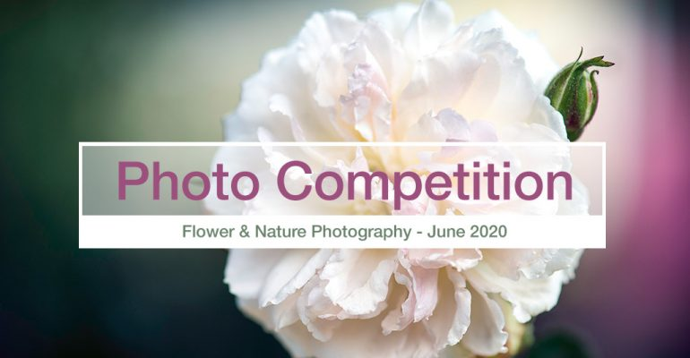 nature and flower photography-competition June 2020