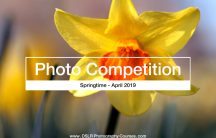 Springtime photography competition