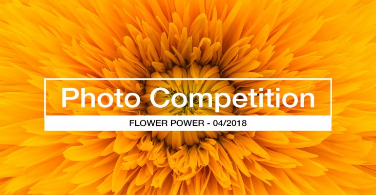 Flower Power Photo Competition