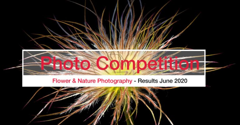 Flower Photography competition banner